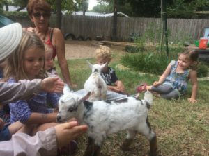 visited by goats